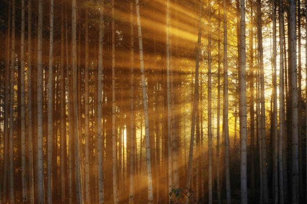 sonnenstrahlen-waermestrahlung-wald_600x600-2x