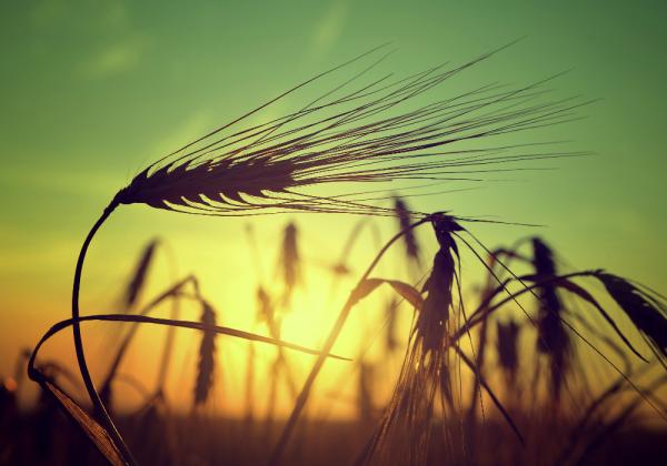 """Infrarotstrahlungspaneel Motiv """"Grain"""" ISP-MGi von Technotherm"""